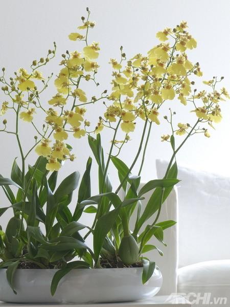 Bí quyết cắm hoa lan cho nhà đẹp cuối tuần - Archi