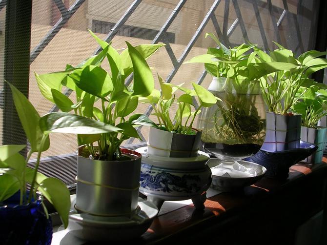 Làm duyên cho bệ cửa sổ với cây và hoa - Archi